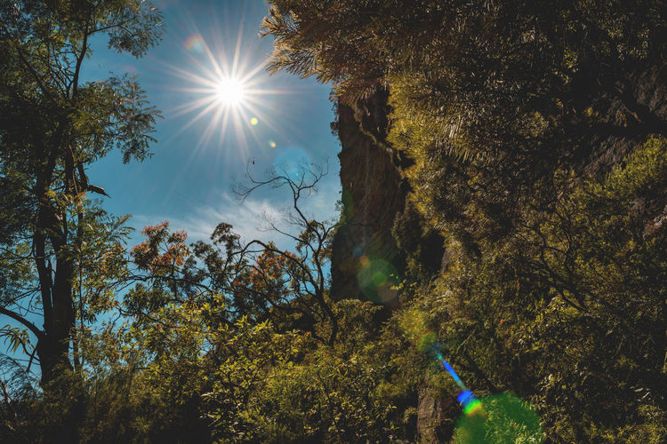 Australian Landscapes Australian Bushland Blue Mountains Dreaming Exploring Longing Nature Australian Landscapes Branch Destination From Below Glare Of The Sun Growth Hiking Adventures Landscape Look Up National Pass Outdoors Relaxing Moments Sunglare Sunlight Tree