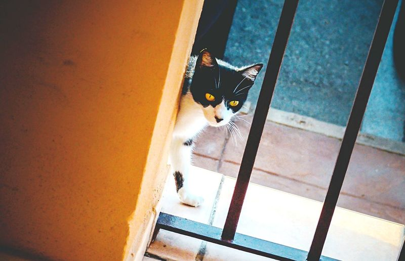 Cat Today's Hot Look Eye4photography  Streetphotography From My Point Of View Animals Taking Photos