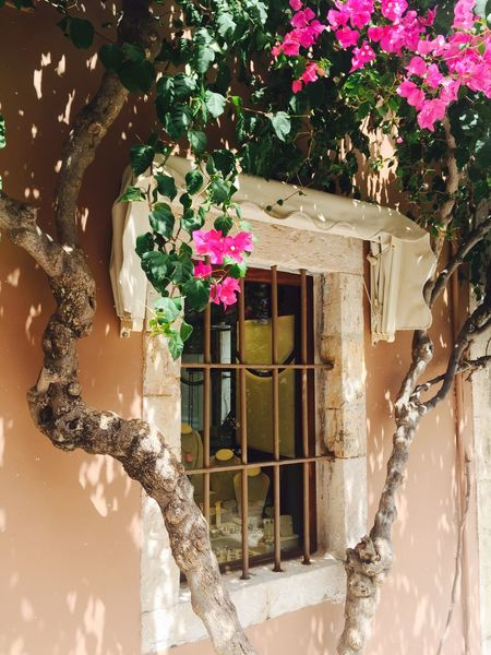 Architecture Beauty In Nature Blooming Building Exterior Flower Fragility Growth Leaf Nature Pink Color Plant Window