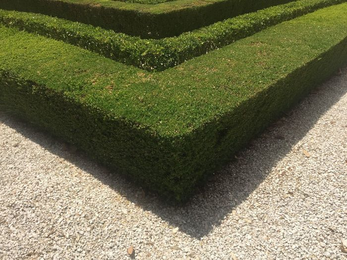 Green Color Plant Hedge Nature Formal Garden Sunlight Shadow Day Garden No People Growth High Angle View Topiary Outdoors Pattern Garden Path Design Park The Minimalist - 2019 EyeEm Awards