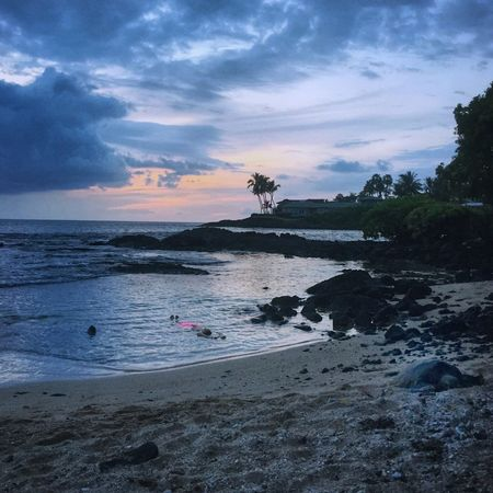 Kona Turtle Sea Turtle Beach Twilight Pink Paradise Hawaii Relaxing