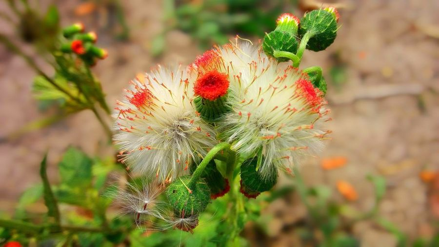 Plant Flowering Plant Flower Freshness Growth Beauty In Nature Fragility Close-up Focus On Foreground Nature Inflorescence Petal Red Outdoors Flower Head Green Color Selective Focus Lifestyles Beauty In Nature Fresh Landscape View Nature Natural Sunlight Wildlife & Nature Grass Art Abstract