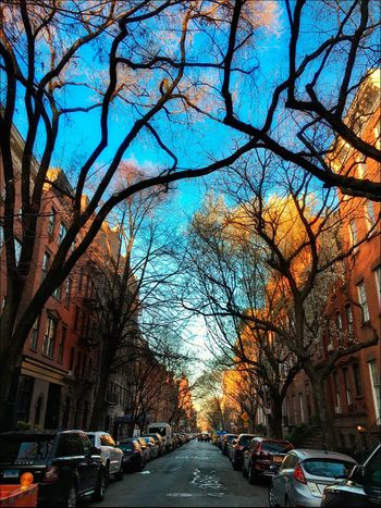 West 11th St. - 3/30/16 Available Light Photography Blending Layers W/ Ps CC 2016 EyeEm StreetPhotography, NYC IPhone Edits W/ Snapseed IPhoneography Old TownHouses Tree Limbs Urban Spring Fever