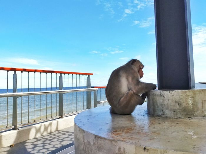 Monkey sitting on railing by sea against sky