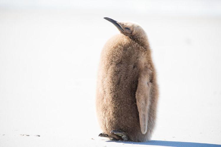 Penguin at beach on sunny day