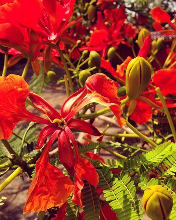 Red Flower Flowers Nature EyeEm Nature Lover Beautiful