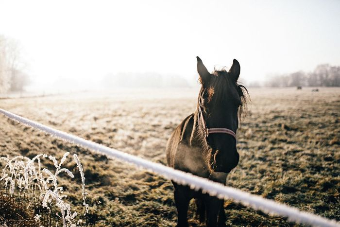 - HueHa - Horse Domestic Animals Mammal Animal Themes One Animal Livestock Clear Sky Nature Field Day Close-up Working Animal No People Outdoors Sky Exploring (null)Landscape Beauty In Nature Idyllic Animal Wildlife Animal Friends Outdoor EyeEm Nature Lover EyeEm Best Shots
