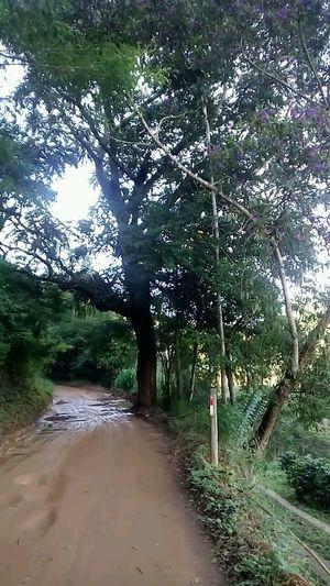 tree Tree Water
