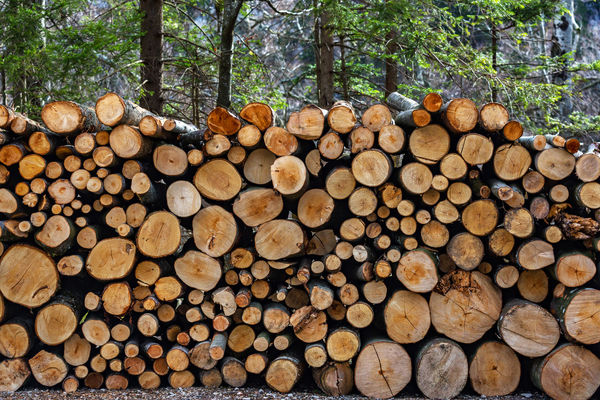Abundance Arrangement Day Deforestation Environmental Issues Firewood Forest Forestry Industry Fossil Fuel Fuel And Power Generation Heap Industry Large Group Of Objects Log Lumber Industry Nature No People Pile Stack Textured  Timber Tree Tree Trunk Wood - Material Woodpile