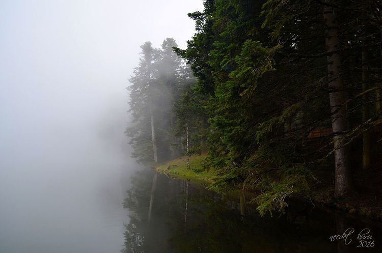 Tree Fog Nature Tranquility Weather Scenics Beauty In Nature Outdoors Tranquil Scene Forest No People Sky Growth Mist Landscape Hazy  Day Mountain Water Golcuk Bolu  Hello World Phtography Photographer Turkey