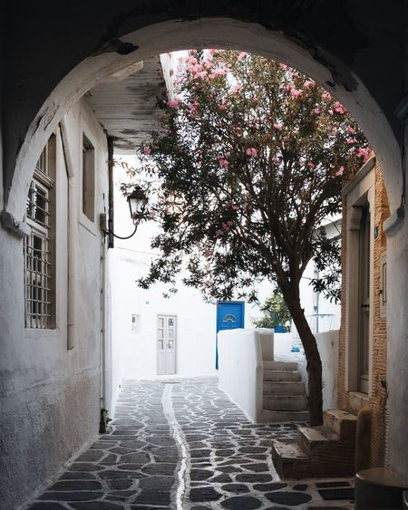 Travel Photography Travel Destinations Alley EyeEmNewHere Vacations Greece EyeEm Gallery EyeEm Selects EyeEm Best Shots Cyclades Paros TheWeekOnEyeEM Architecture Built Structure Building Building Exterior No People Arch The Way Forward Day Sunlight