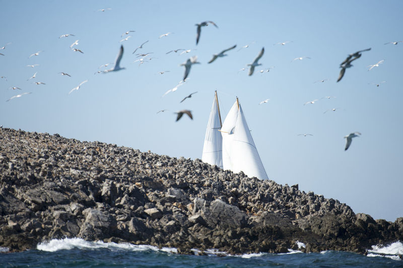 Water Sea Sky Bird Flying Nature Rock No People Nautical Vessel Clear Sky Rock - Object Sailboat Flock Of Birds Seagull Marine Bodrum Sailing Regatta Lamdscape