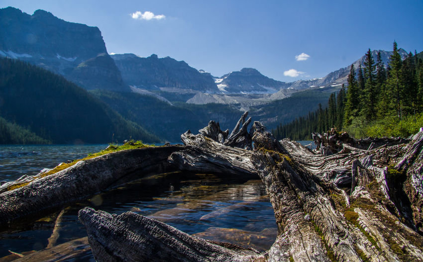 Close-Up Of Driftwood By River Against Mountains On Sunny Day