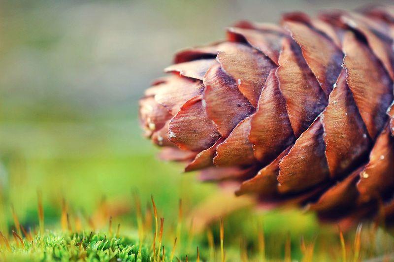 Close-up of fresh leaf