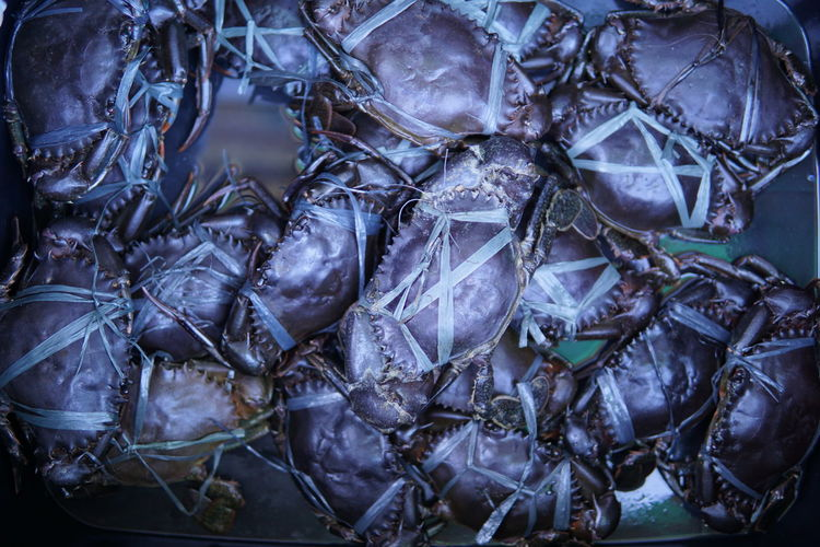 High Angle View Of Crabs In Container For Sale At Market