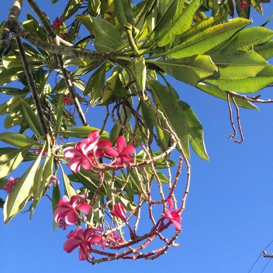 Enjoying Life Flowers Hawaii Nature