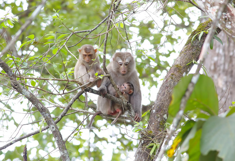 Animal Wildlife Animals In The Wild Tree Animal Themes Animal Plant Primate Monkey Branch Vertebrate Mammal Group Of Animals Young Animal Two Animals Day Nature Baby Sitting Young Animal Family Outdoors