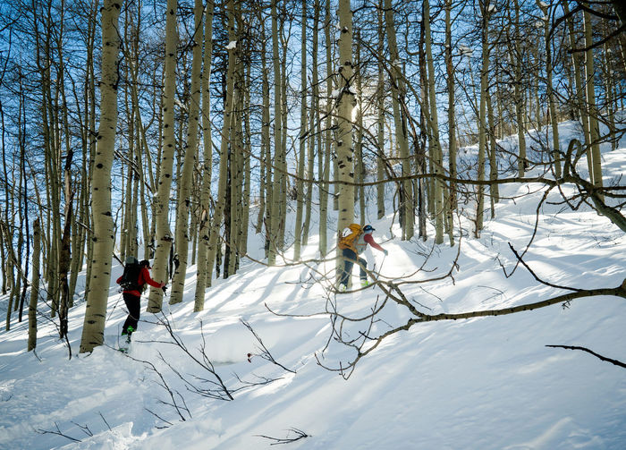 Two skiers hike through an aspen forest Adult Adults Only Adventure Adventure Club Aspen Backcountry Beauty In Nature Cold Temperature Day Hike Nature Only Men Outdoors People Ski Skiing Snow Tree Trees Two People Winter