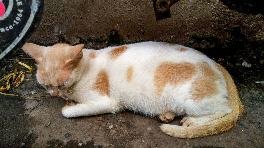 High angle view of ginger cat sleeping