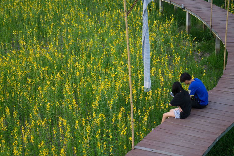 Rear view of couple on yellow flowering plants