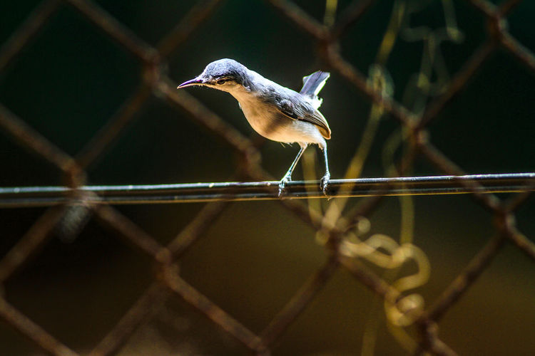 Close-up of bird perching on fence
