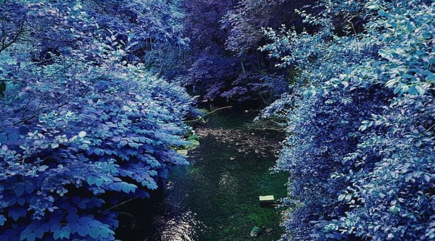 Tranquility Water Tranquility Tranquil Scene Tree Scenics Non-urban Scene Nature Beauty In Nature Growth Blue Plant Day Waterfront Outdoors Vacations Lush Foliage No People Green Color WoodLand Majestic