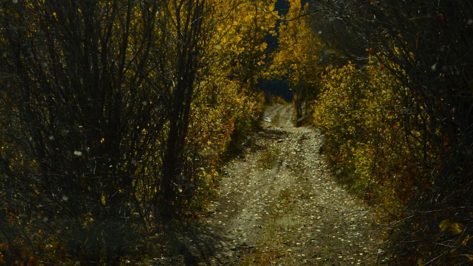fall Desolate Two Tracks Mountain Travel Destinations Backgrounds Yellow Full Frame Shadow Nature No People Outdoors