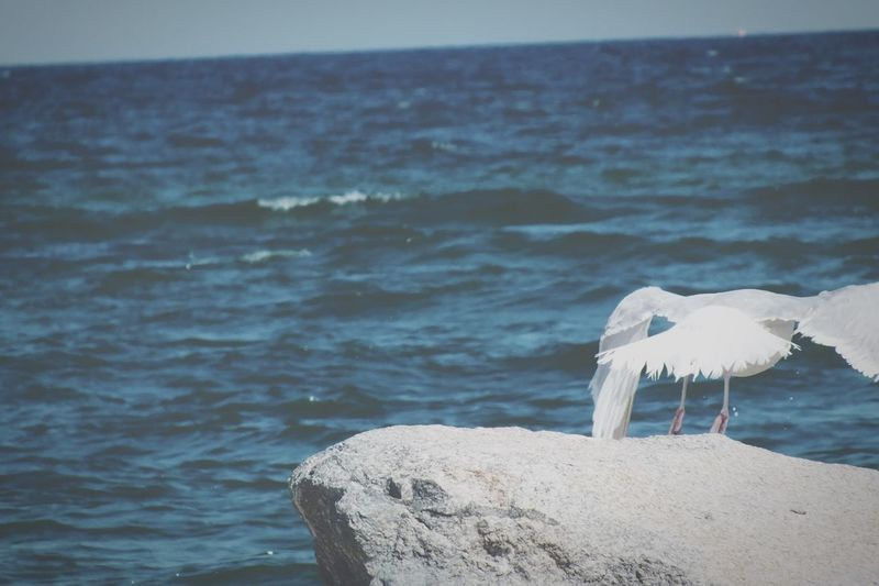 Flying Inflight Birds TakeOff Ocean Ocean View Marthasvineyard