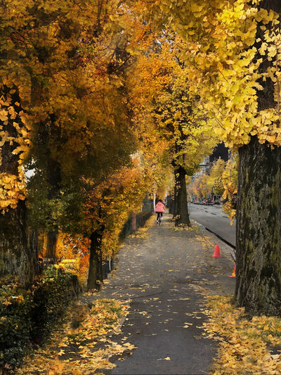 Person walking on footpath during autumn
