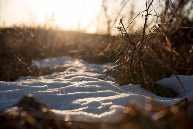 Close-up of snow on field against sky