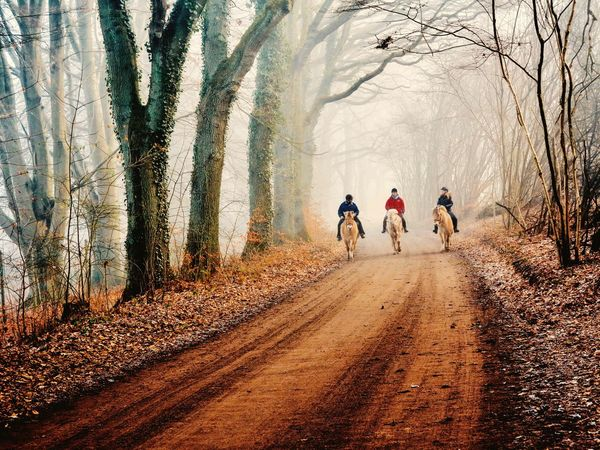 Beauty In Nature Lifestyles Nature Outdoors Fog Foggy Mist Horse Way People Tree Trees Forst Together Life Live Love Real People Rear View Bare Tree Togetherness Day Winter