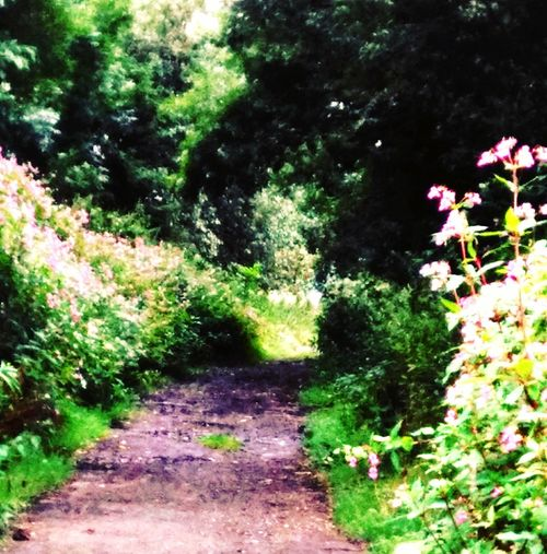 I love where i live. Bridalway Village Life Hidden Beauty Footpath Beauty In Nature First Eyeem Photo