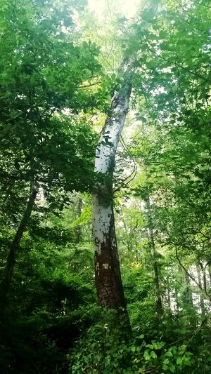Beautiful old tree off the Natchez Trace road trip we took this past weekend... Outside Photography Green Green Green!  Natchez Trace Mississippi Summer Forrest Photography