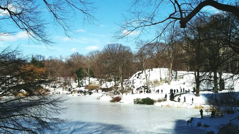 snow Shaddow And Light Delicate Freshness Fresh On Eyeem  Architecture New York Snow Tree Water Swimming Pool Men Reflection Sky Snow Covered Building Silhouette Bare Tree Exterior Residential Structure Branch Outline