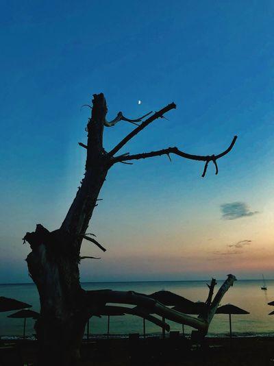 Sunset Nightsky Night Beach Tree Moon Sky Water Nature Tree Silhouette No People Sea
