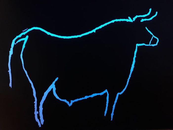 Touro Gravuras UV Light Black Blue