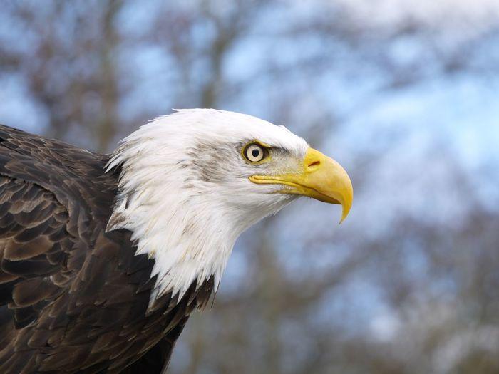 EyeEmNewHere Eagle Bird EyeEm Nature Lover Animal Photography