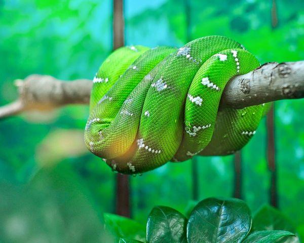Tree Snake Snake Reptile Green Coil Beauty Specks