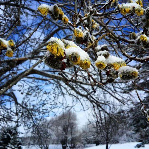 Bursa Uludag Uludagmillipark Nisanayı Kar Buz Mavigökyüzü Donançiçekler Agaclar