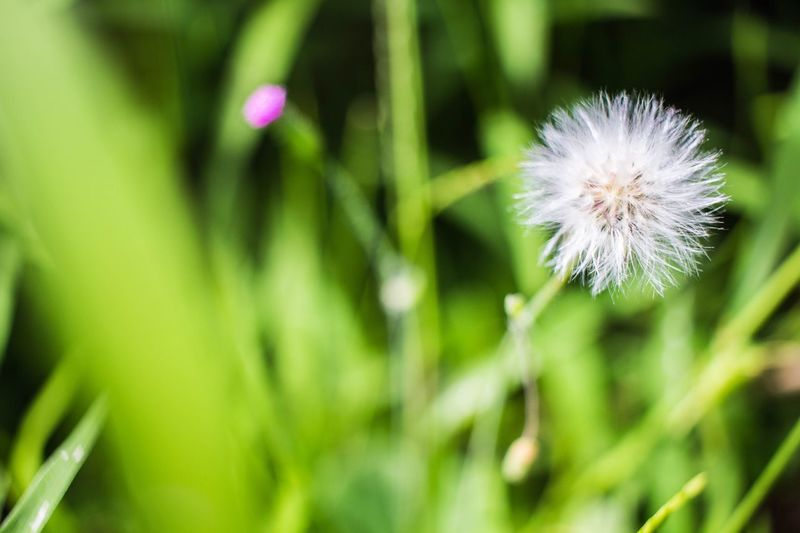 Flower Growth Close-up Beauty In Nature Dandelion Day OpenEdit Open Edit Photooftheday Tokyo,Japan Photography Outdoors Nature EyeEm Nature Lover EyeEm Best Shots