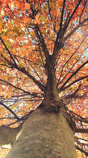 Tree Nature Autumn Change Beauty In Nature Low Angle View Tree Trunk Branch Growth Outdoors Leaf No People Day Sky Scenics Close-up