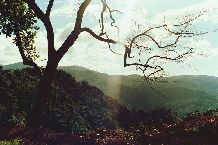 Filmnotdeath Kodak Giabac 35mm