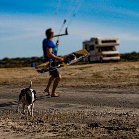 Dog Dogs Beach Beachphotography Beach Photography Beach Life Camping Camper Kite Man Male