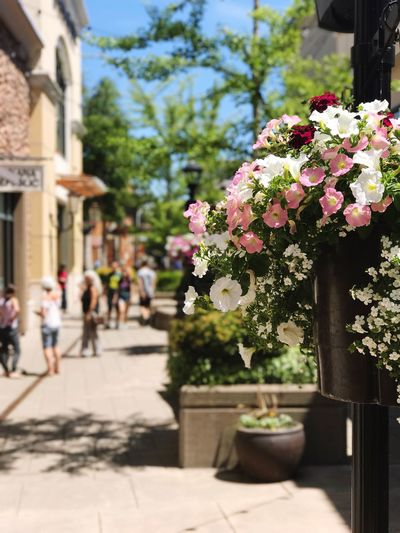 Flower Potted Plant Table Day Vase Plant Outdoors Sunlight Building Exterior Nature Growth Fragility Tree Architecture Close-up No People Freshness Bridgeport Village