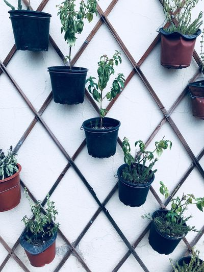 Vegan Green Basil Potted Plant Plant Growth Nature No People Flower Pot Architecture Leaf Day Outdoors High Angle View Plant Part Green Color Building Exterior Built Structure Gardening Beauty In Nature Houseplant