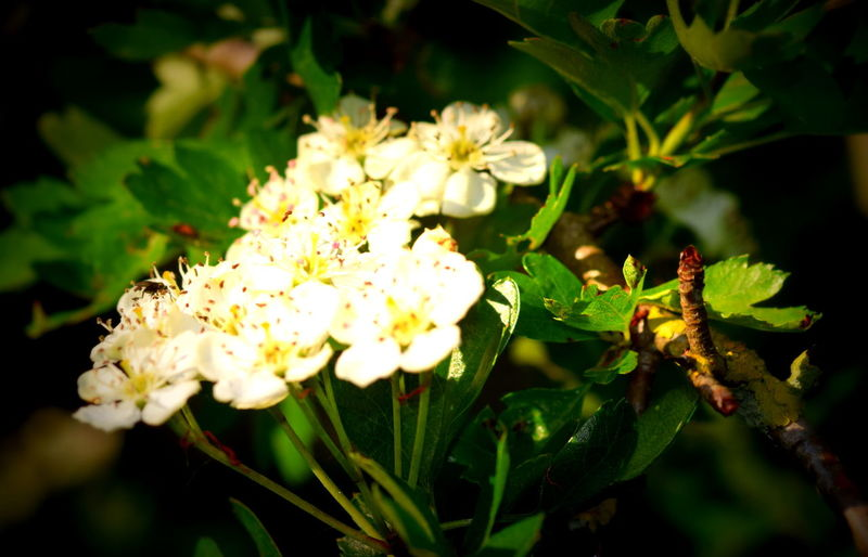 Beauty In Nature Blooming Close-up Flower Flower Head Focus On Foreground Freshness Nature Plant