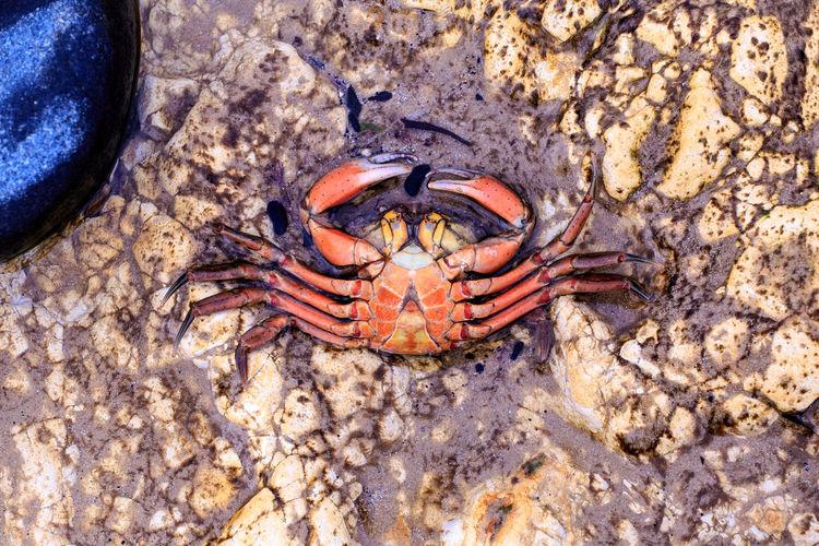 Close-up portrait of crab on beach