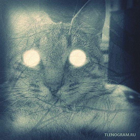 Russia Rostov-on-Don Cat Cats милка_зючка_недокотаны лиза тленограмм в действительности, эта кошачья жопа выглядит именно так :3 lol