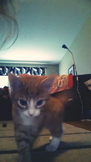 Catwalk Enjoying Life Be Nice Cuties <3 Cat♡ My Cat