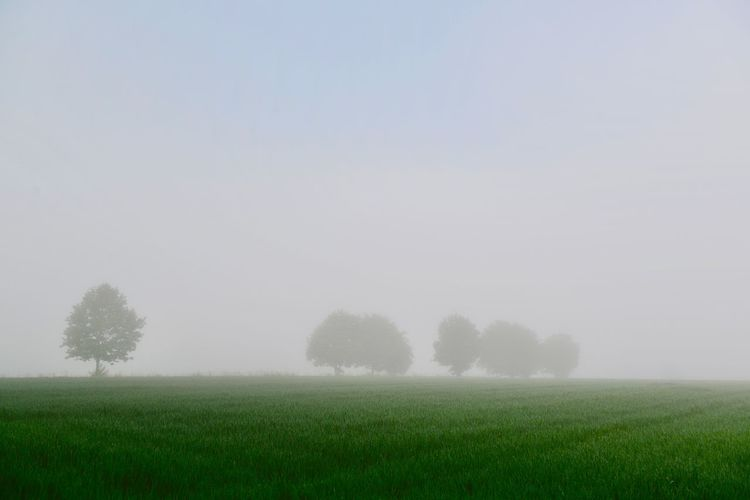 Silence Idyllic Dawn Plant Land Field Environment Growth Landscape Sky Tranquility Tree Fog Tranquil Scene Beauty In Nature Copy Space Nature Scenics - Nature No People Rural Scene Outdoors Day Green Color
